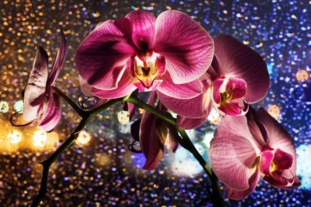 Pink orchid on colored background with drops photo
