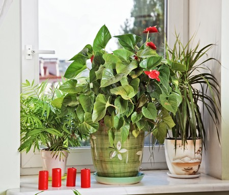 windowsill: Flowers and red candles on window-sill