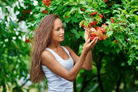 guelder: Beautiful woman picking guelder rose berries Stock Photo