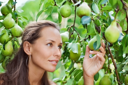 Beautiful woman picking the pear in the garden Stock Photo - 8371627