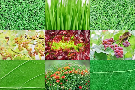 Collection of fresh green nature plant backgrounds photo