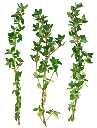 Fresh green thyme twigs, isolated on white macro