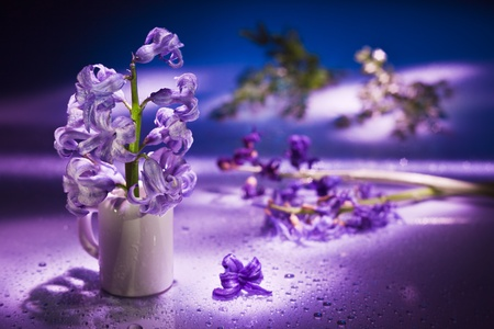 Still life with hyacinth flower in gentle violet colors and magic bokeh Stock Photo