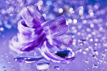 hyacinth: Still life with hyacinth flower in gentle violet colors and magic star shaped bokeh
