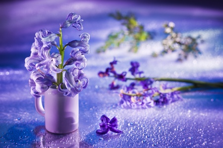 Still life with hyacinth flower in gentle violet colors and magic bokeh photo
