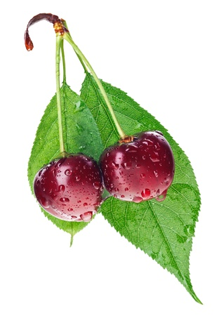 Pair of red wet cherry fruit on stem with green leaf isolated on white photo