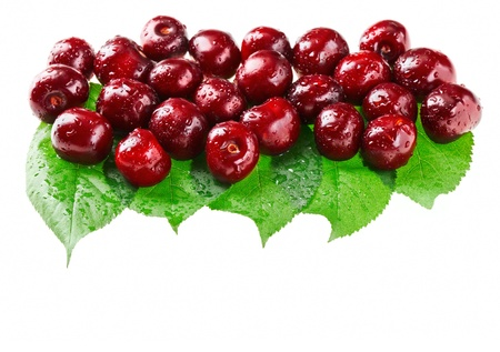 dark cherry: Many red wet cherry fruits (berries) on green leaves, isolated with copy space design ready