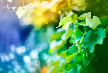 Vine, shallow depth of field shot with magic colors and bokeh photo