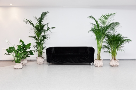 Black sofa in modern minimalism interior with green plants photo