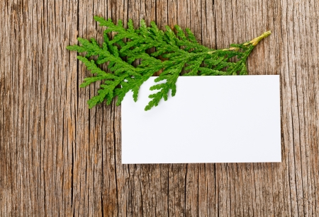 Wooden background with empty white card and green thuja branch photo