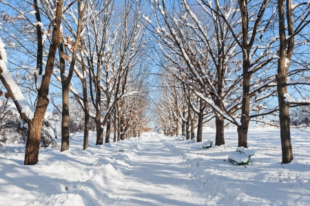 Deserted straight rural tree lined road covered in heavy winter snow with a section cleared down the centre for motor vehicles Stock Photo - 16918209