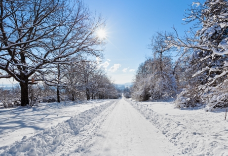 Deserted straight rural tree lined road covered in heavy winter snow with a section cleared down the centre for motor vehicles Stock Photo - 16918200