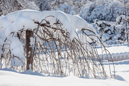 lopsided: Decorative dwarf tree covered by hard snow Stock Photo