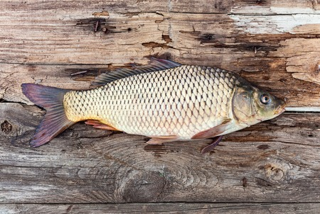 freshwater fish: Carp fish over old wooden plank board Stock Photo