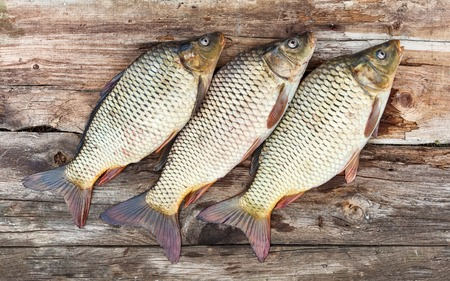cyprinidae: Carp fish over old wooden plank board Stock Photo