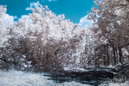 infrared: Infrared  IR  photography landscape with forest road