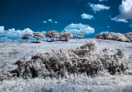 infrared: Infrared  IR  landscape with trees on the hill