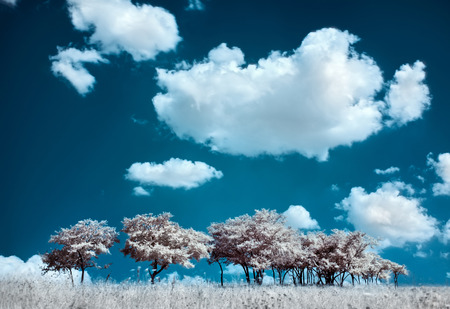 infra red: Trees on the hill and cumulus clouds, infrared  IR  landscape Stock Photo