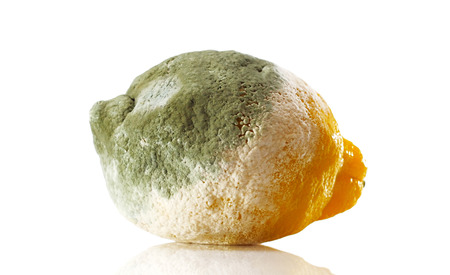 spoilage: Rotten lemon covered with mold over white background Stock Photo