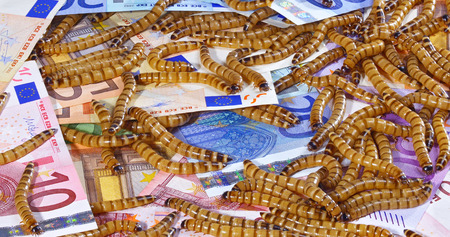 crisis economica: Big ugly worms crawling over euro banknotes background, economic crisis concept