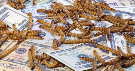 Economische crisis concept met geld en wormen, close-up achtergrond Stockfoto