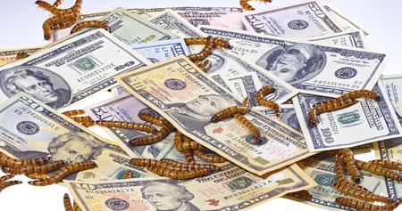 crisis economica: Economic crisis concept with money and worms, closeup background Foto de archivo