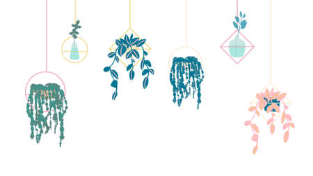 set of hanging plants in pots for interior. Flat cartoon vector illustration on white background