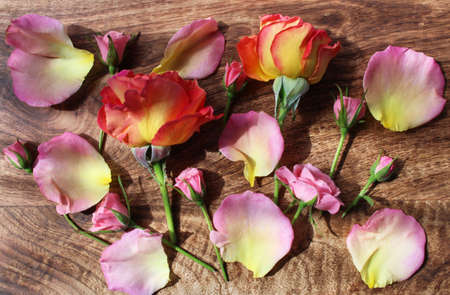 fresh beautiful rose flowers on wooden board Banque d'images