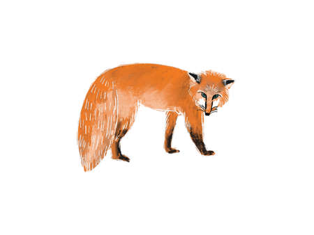 Hand drawn illustration of walking fox isolated on white background. Cute forest animal in sketch style