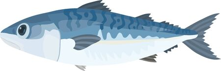 Vector illustration of mackerel on white background.