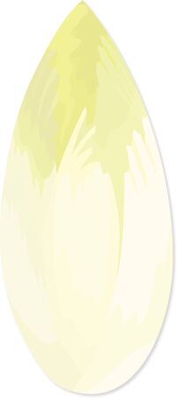 Illustration of Chicory on a white background.