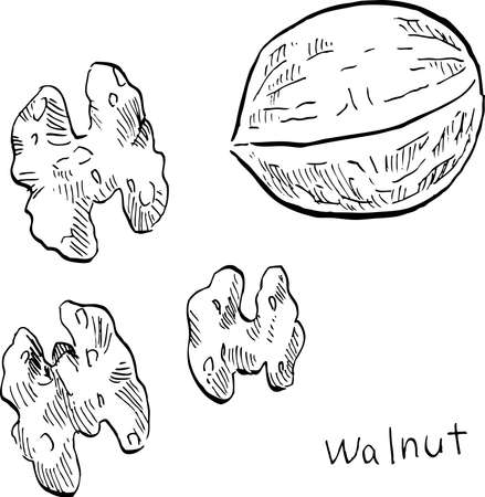 This is a black and white illustration of a walnut drawn with a hand-drawn pen.