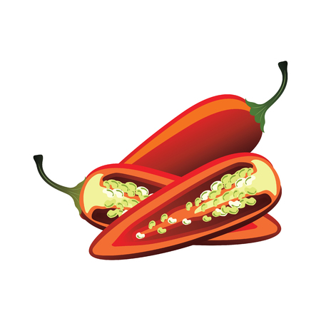 Slices of raw red jalapeno pepper. vector illustration.