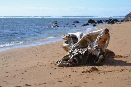 driftwood on Kauai