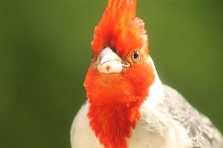 pretty bird of kauai Фото со стока