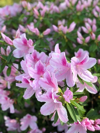 Flowers at Dallas Arboretum Stock Photo