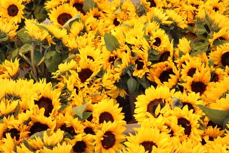 Beautiful Sunflowers in a public market