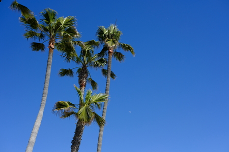 palms over southern california Imagens - 122995289