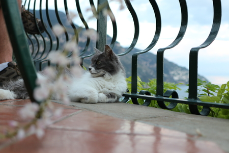 Italian Cat in Positano
