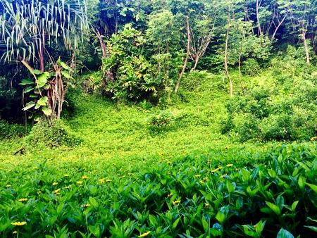 Jungles of Kauai Stock Photo