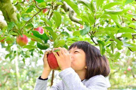 Enjoy Apple picking girl Stock Photo