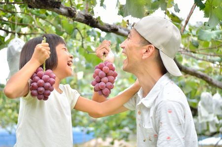 Parents and children enjoy picking grapes