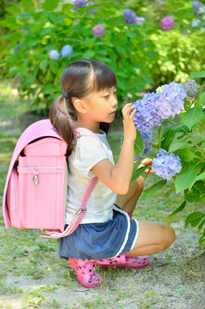 Hydrangea and elementary school girls 写真素材