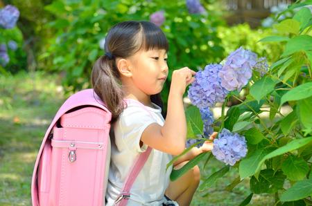 Hydrangea and elementary school girls Stock Photo