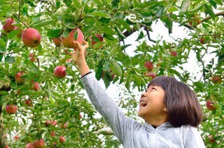 Girls picking apples Stock Photo
