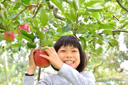 Girls picking apples Stock Photo
