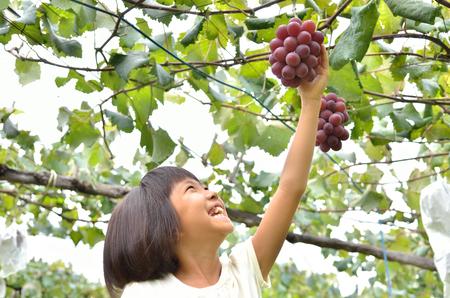 Girls enjoy grape picking