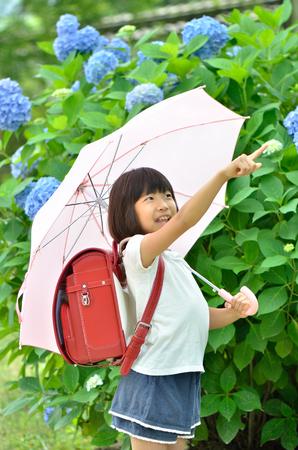 Hydrangea and elementary school girl Stock Photo