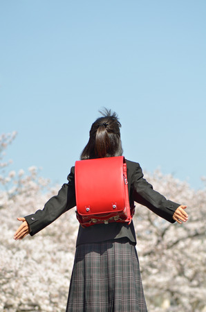 Japanese elementary school student (cherry blossom, rear view) 스톡 콘텐츠