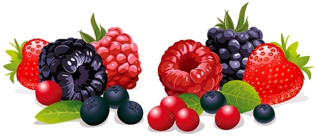 berries isolated  Vector